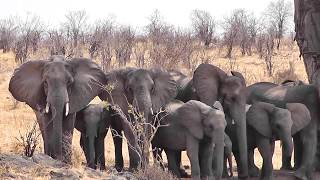 Safari in Ruaha National Park Tanzania September 2011
