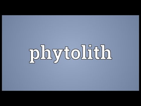 Phytolith Meaning