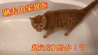 お風呂に入る猫のきんたさんの過去動画】 子猫とお風呂 https://www.you...