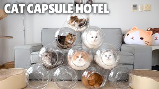 Cat Capsule Hotel | Kittisaurus