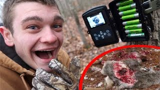 WHAT ATE THE RACCOON CARCUS???