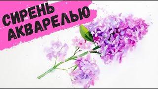 Рисуем акварелью: Сирень — kalachevaschool.ru