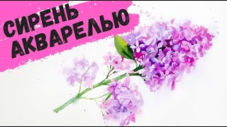 Рисуем акварелью: Сирень — kalachevaschool.ru(http://online.kalachevaschool.ru/y/bd42849., 2015-05-30T20:12:30.000Z)