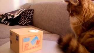Cute kitty and itazura coin bank
