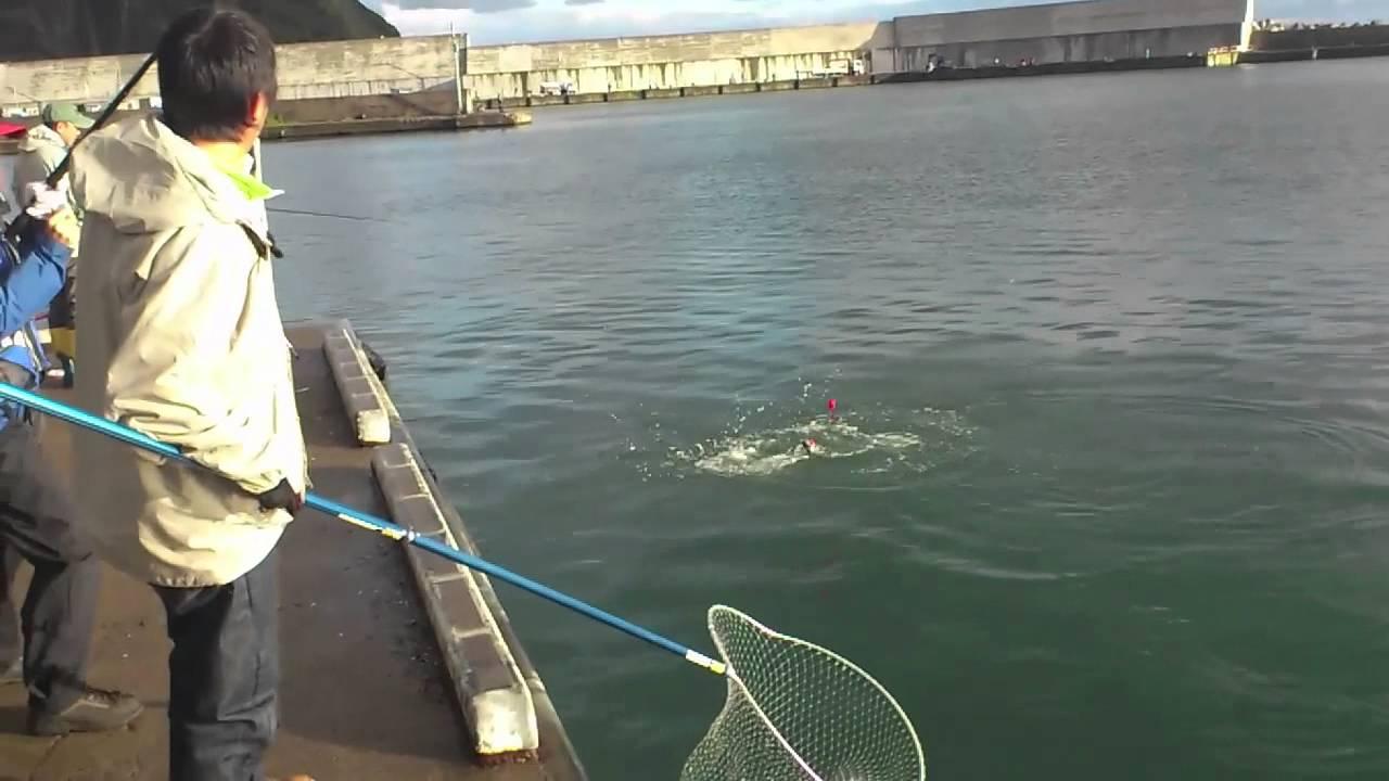 アキアジ釣り美國漁港10月13日早朝 - YouTube