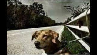 Супруги увидели собаку привязану к отбойнику, но не придали этому значения,но потом муж вернулся