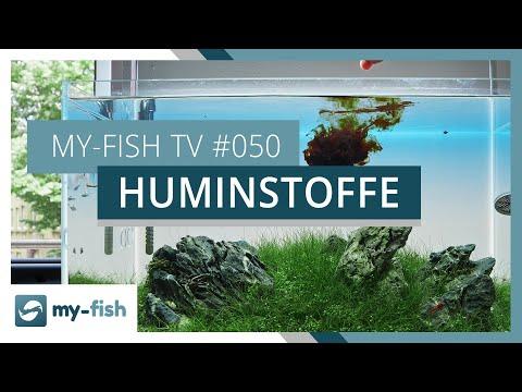 Warum Huminstoffe im Aquarium wichtig & gesund sind | my-fish TV
