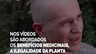 Maconha é: Negócio - Por Yahoo Brasil e NAV Reportagens