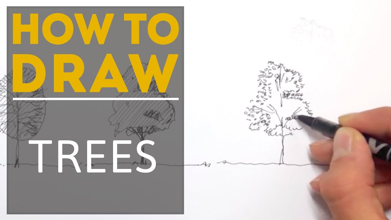 Architecture Drawing Trees how to draw a tree - youtube