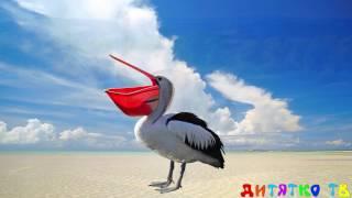 Птицы для самых маленьких Учим птиц Развивающие мультики для детей Животные для детей Учим животных
