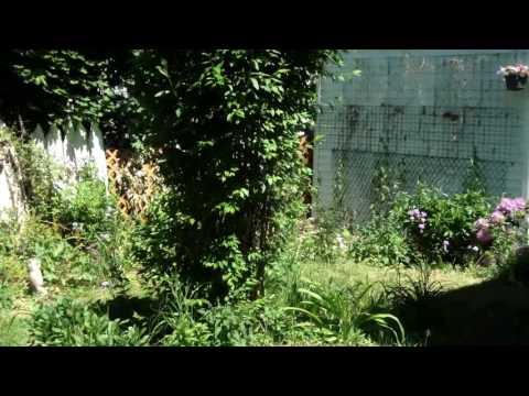 Chinese Vietnamese American organic garden, NY, US