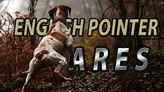 English Pointer Ares / Beccaccia / Woodcock Hunting