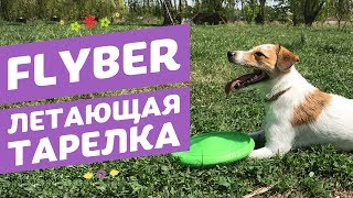 Flyber   Флайбер Летающая тарелка для собак   Обзор зоотоваров pethouse.ua