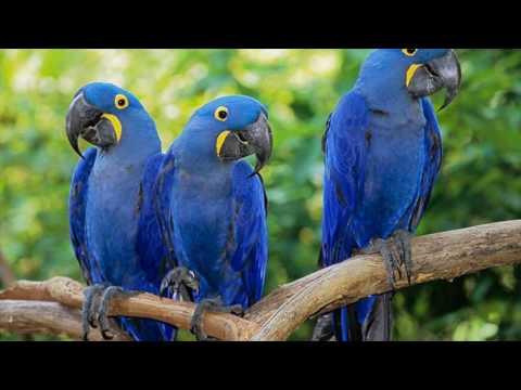 Blue Love Birds Images