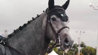 Monster | Horse fails, falls, bloopers, outtakes. Cool equestrian moments