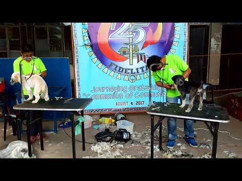 4th Pet Grooming in Bontoc, Mt Province ( Fr Marcs Castaneda Projects ) - Groomers - Ronnie et Nhobe