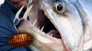 The Vampire Fish  SPECIAL EPISODE  River Monsters
