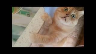 Влажный корм для кота(, 2016-09-23T20:06:04.000Z)