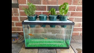 My DIY Aquaponics Aquarium Project