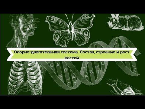 Биология 8 класс $7 Опорно-двигательная система. Состав, строение и рост костей