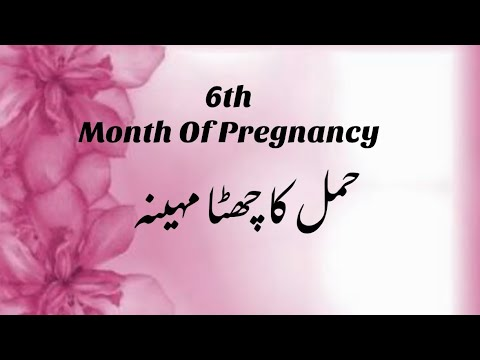 What to anticipate at 6 Several weeks Pregnant