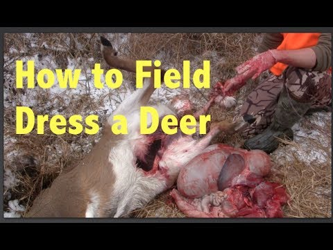 How to Field Dress a Whitetail Deer... Step By Step....