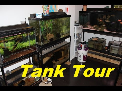 TROPICAL FRESHWATER AQUARIUM FISH ROOM TOUR
