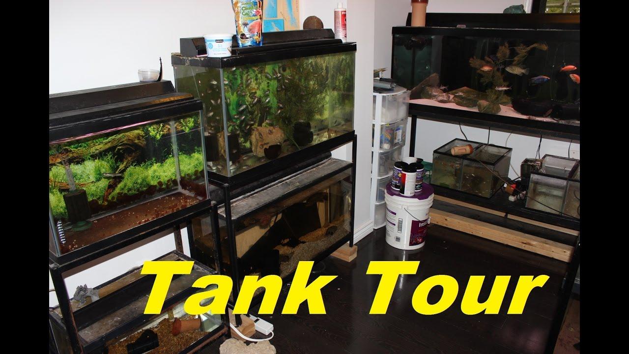 Freshwater aquarium fish games - Tropical Freshwater Aquarium Fish Room Tour