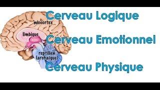Test personnalité : Utilisez-vous votre cerveau physique émotionnel ou logique
