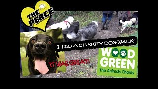 Our Dog Percy the Black Labrador does a Charity walk in aid of Wood Green Animal Shelter