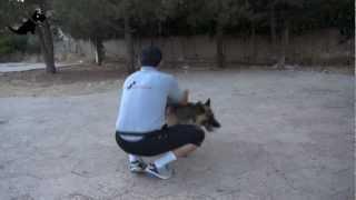 Dog Training In Jordan - Amman, Basic Obedience, Aleef Express Dog Training School