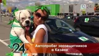 В Казани прошел автопробег защитников животных