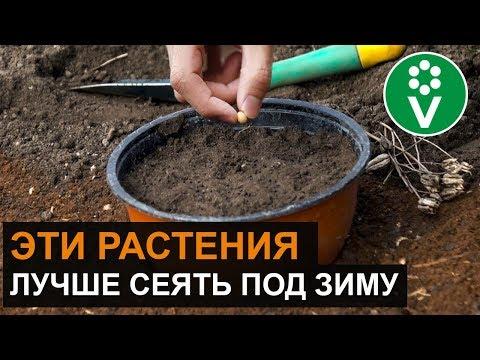 Вопрос: Как распознать семена и сроки их посадки ( см)?