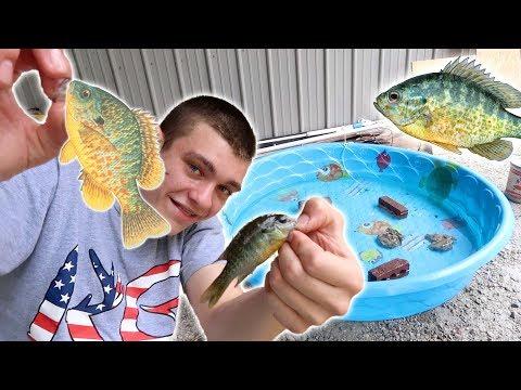 MULTI SPECIES POOL POND CHALLENGE! *Creek Fishing*