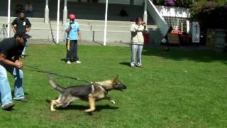 Schutzhund Seminar, Marek Kustar From Slovakia, With Nina Lk-9  Www.lk-9.com