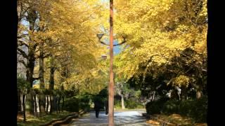 晩秋の高知城周辺を皆さんとカメラを持って一緒に散策しましょう。黄色...