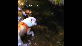 初めて深い所を泳げた、そして獲物ゲット.