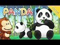 Lagu Anak Indonesia | Panda