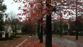 ワンハンドレッドヒルズの秋2