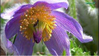 Краски Ботанического сада 4K . Красивая музыка ! Видео для души ! relax video !