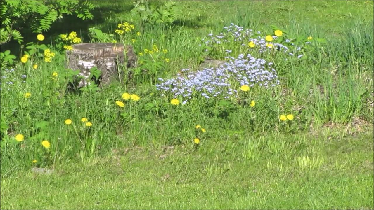 Sait Multa Kukkaset Toukokuun Sanat