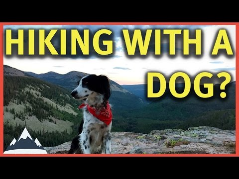 Hiking With A Dog - Tips and Considerations