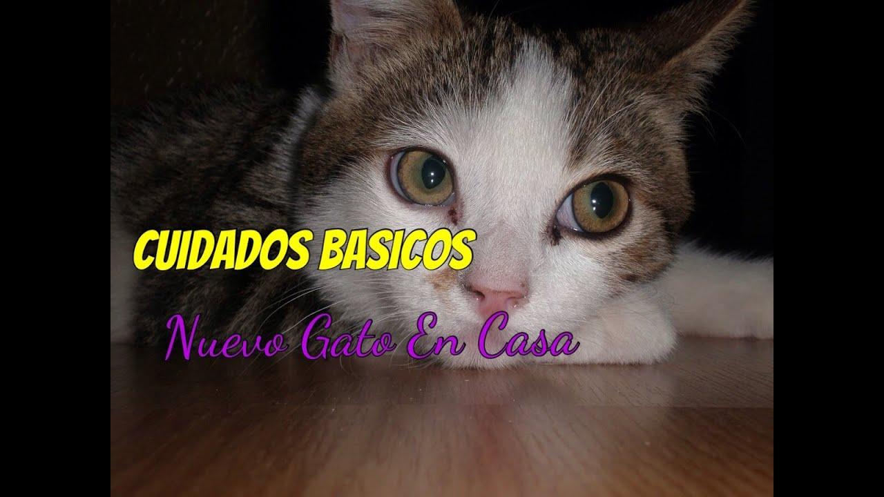 Cuidados b sicos para la llegada de un nuevo gato a casa youtube - Cuidados gato 1 mes ...