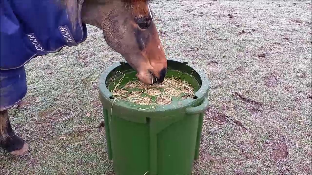 lid slow dark shop saver hay feeders feeder blue horse