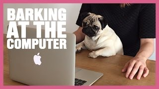 Loulou The Pug Barking At The Computer
