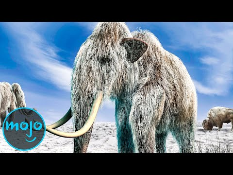 Top 10 Animals Scientists Want to Bring Back From Extinction
