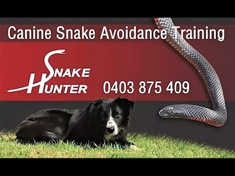 The Snake Hunter's Comprehensive Guide To Keeping Dogs Safe From Snakes