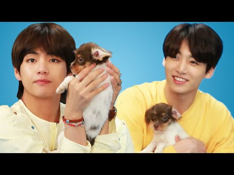 download BTS Plays With Puppies While Answering Fan Questions