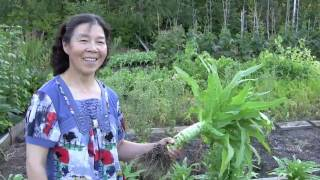 Unusual Chinese vegetable grows in city backyard