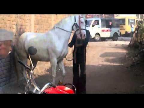 horse dance kannauj